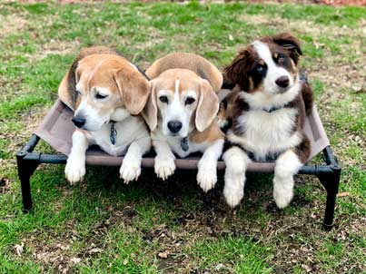 dogs sitting together
